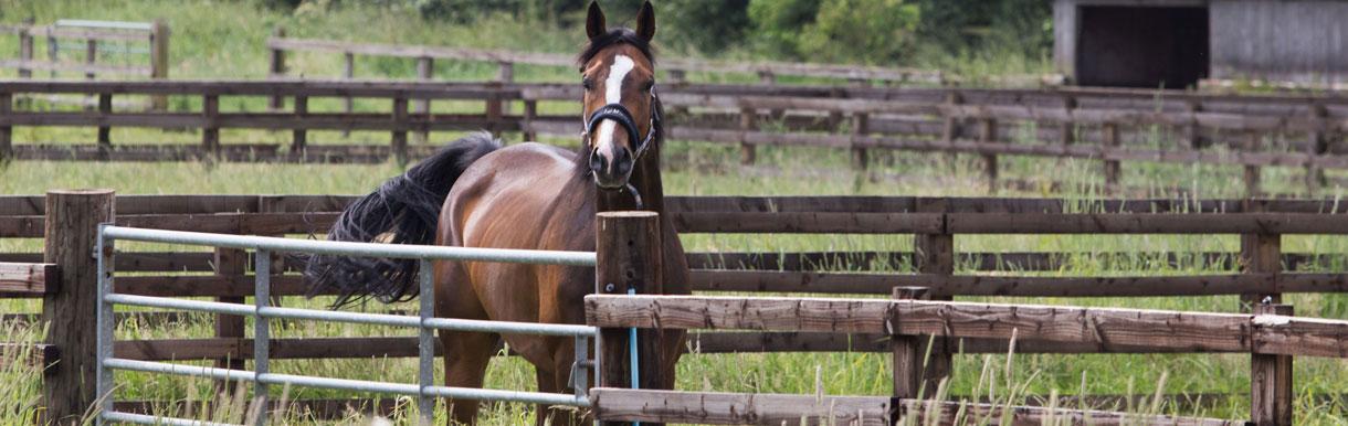 Equine Influenza outbreak